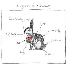 Diagram of a Bunny