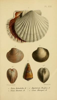 Science Illustration, Nature Illustration, Botanical Illustration, Nature Prints, Art Prints, Shell Drawing, Scientific Drawing, Historia Natural, Street Art