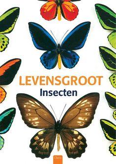 Kerntitels Kinderboekenweek 2015 : Groep 3 & 4: Levensgroot. Insecten