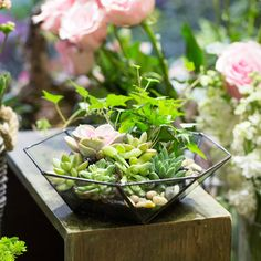 Clear Glass Geometric Terrarium Succulent Fern Moss Eight-surfaced Wide-mouth,Glass Terrarium planters