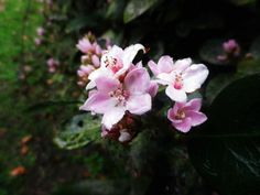 My Photos, Rose, Flowers, Plants, Pink, Plant, Roses, Royal Icing Flowers, Flower