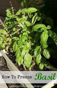 A Spoonful of Sugar: How To Freeze Basil