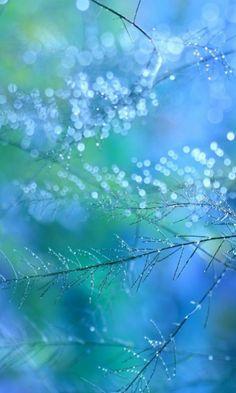 Turquoise dream                                                       …