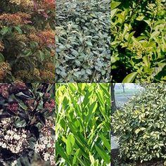Haie fleurie et persistante quels arbustes pour haies for Plantes decoratives jardin