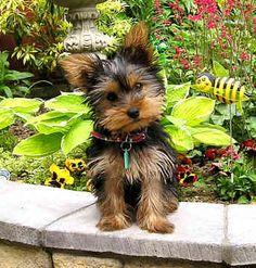 Eu quero! Cute ♡