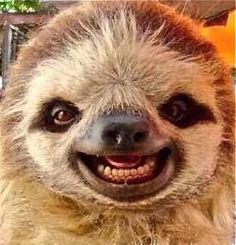 sloth - happy.