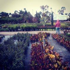 We love visiting the nursery to see all the plants!