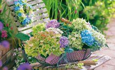 Deko-Ideen mit Hortensien -  Schon am Strauch sind die kugel- und tellerförmigen Blüten der Hortensien ein Traum. Äußerst attraktiv zeigen sie sich auch als Deko mit ländlichem Charme. Hier sind ein paar schöne Deko-Ideen zum Nachmachen.