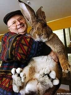 Herman the giant bunny...look how big his feet are...I want him!!! lol
