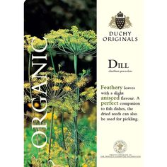 Dill - Duchy Originals Organic Seeds - Herbs - Thompson & Morgan
