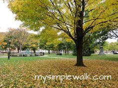 The square in Wellsboro, PA
