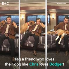 Star Wars Discover Chris Evans and His Dog Are the Cutest Pair Mans best friend. Dodger and Chris Evans are a match made in heaven! Funny Marvel Memes, Marvel Jokes, Dc Memes, Marvel Avengers, Funny Avengers, Marvel Heroes, Marvel Comics, Steve Rogers, Chris Evans Captain America