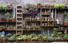 impressive cacti collection