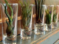 Air Plant Collection 3 Air Plants With 3 Glass Vessels - Perfect Terrariums - Gifts under 30 - Gift for Her on Etsy, $26.00