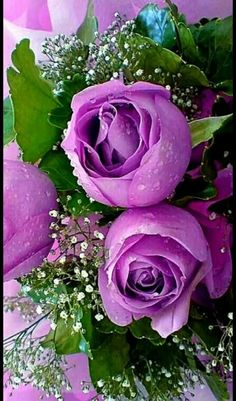 Captivating Why Rose Gardening Is So Addictive Ideas. Stupefying Why Rose Gardening Is So Addictive Ideas. All Flowers, Amazing Flowers, Beautiful Roses, My Flower, Beautiful Flowers, Beautiful Pictures, Lavender Roses, Purple Flowers, Bouquet Champetre