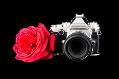 Nightrose Photo. Red Rose and Camera logo design for my business cards.