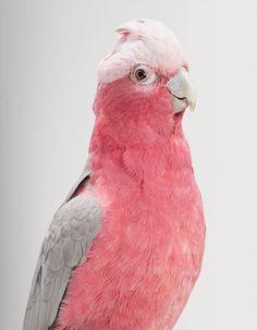 Maravillosos Retratos de Aves por Leila Jeffreys | FuriaMag | Arts Magazine