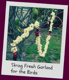 Go Explore Nature: String Fresh Garland for the Birds