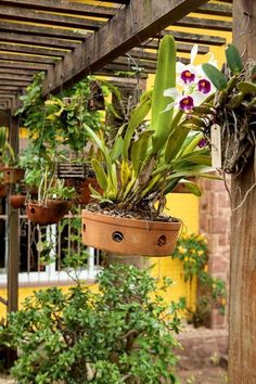 Clique e assista o vídeo. Beautiful Flowers Garden, Flowers Nature, Pretty Flowers, Air Plants, Garden Plants, Indoor Plants, Above Ground Garden, Plantas Indoor, Orchid House
