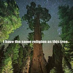 If I were a religious person.a forest would be my church. Mother Earth, Mother Nature, Tree Of Life Quotes, Cosmos, Pantheism, Anti Religion, Nature Quotes, Forest Quotes, Earth Quotes