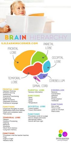 Lower Brain Diagram Femur Bone The Human Worksheet School Pinterest Hierarchy When Your Child S Levels Are Weak They Can T Learn Ilslearningcorner