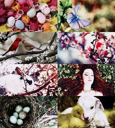 wheel of the year | Ostara (March 20 - 21)  Ostara happens at the Spring (Vernal) Equinox. The days becomes equal to the night, and the light finally overcomes the darkness of winter. Ostara's theme is fertility