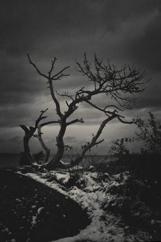 November on my mind - Tree in Hanko beach
