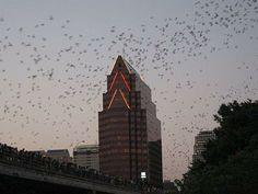Austin, TX: Bats Under the Congress Avenue Bridge