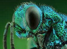 30+ Stunning Extreme Macro Photography Shots by Gold Medalist AlHabshi