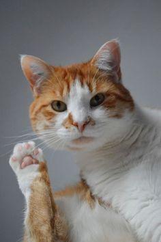 ---,_,----------------------------------------------=('ᴥ')=---------GATTI/CATS---------------ฅ(_ฅ)ᘚ--------by-ⓛⓤⓐⓝⓐ-------------