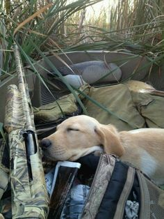 Good ol' hunting dog, sleeping on the job. A hard worker deserves a good nap!
