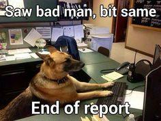 "An ace reporter! ""Saw bad man, bit same - End of report"" #dogs #pets #GermanShepherds facebook.com/sodoggonefunny"