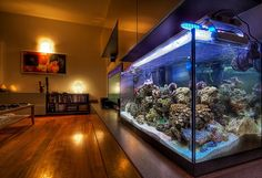 aquarium goes from one end of the wall to the other fresh water tank in Silo Wall Aquarium Auxiliary Tank higher than Fish Tank, Grow Beds & Collection Tank & back Cool Fish Tanks, Saltwater Fish Tanks, Saltwater Aquarium, Marine Aquarium, Reef Aquarium, Aquarium Fish Tank, Wall Aquarium, Aquarium Terrarium, Amazing Aquariums