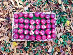 An apple a day. Plum, Food And Drink, Fruit, Apple