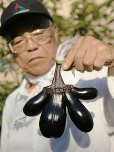 1 year post earthquake/nuclear leak in Japan mutated eggplant found in osaka.