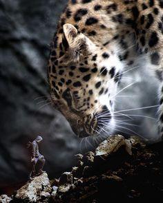 174 Likes, 4 Comments - Motivation Giant Animals, Big Animals, Photomontage, Lions Live, Lion Wallpaper, Lion Pictures, Cute Baby Cats, Lion Art, Prehistoric Animals