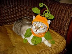 Halloween has now passed and all over the world cat owners are uploading their photos of their cats dressed as pumpkins. Big House Cats, Birthday Cake For Cat, Halloween Party, Halloween Costumes, World Cat, Pumpkin Costume, Cat Scratching Post, Cat Dresses, Pet Costumes