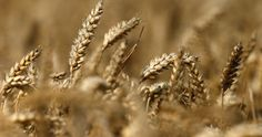 food shortage essay 4 ways climate change could cause food shortages Food Security, World Economic Forum, Sustainable Food, Agriculture, Sustainability, Ireland, Teaching, Canning, Climate Change