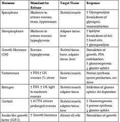 Endocrine+Organs+List | FSH; follicle stimulating hormone: LH; lutenizing hormone: