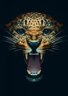Angry Animals, Animals And Pets, Cute Animals, Wild Animal Wallpaper, Jaguar Wallpaper, Leopard Wallpaper, Images Roi Lion, Regard Animal, Leopard Eyes