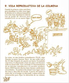 La Familia de la Apicultura - The Beekeeping of Family: Manual Apícola Ilustrado - Beekeeping Illustrated Manual. Drone Bee, Raising Bees, Bee Farm, Family Traditions, Queen Bees, Beekeeping, Candle Making, Art Forms, Harvest
