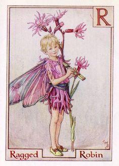 Echte koekoeksbloem alfabet Letter R Flower Fairy Vintage Print, c.1940 Cicely Mary Barker-boekillustratie plaat