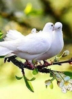 """""""The ultimate victory of love is unquestioned."""" - from """"Love"""" in the Gardens of the heart series by Summit University Press All Birds, Cute Birds, Pretty Birds, Little Birds, Beautiful Birds, Animals Beautiful, Animals Kissing, Animals And Pets, Funny Animals"""