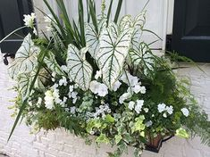 Pure white looks great in any garden. We love this elegant window box -- it's perfect for brightening a shaded spot!