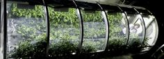 NASA scientists have come together with the university of arizona to develop an inflatable greenhouse that can be used to grow vegetables in deep space.