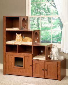 Bookcase Climber and Hidden Litter Cabinet -- Ideal Furniture for Multi-Cat Households