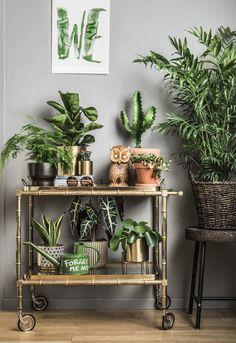 plantagen växter