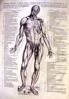 Andreas Vesalius - anatomical studies of pioneering physician.