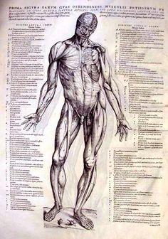 Andreas Vesalius - anatomical studies of pioneering physician.