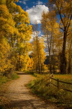 Aspen Autumn Pathway by Forrest Boutin